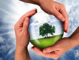 I migliori 5 Migliori prodotti biodegradabili
