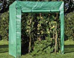 I migliori Top 10: Le migliori dieci serre da giardino