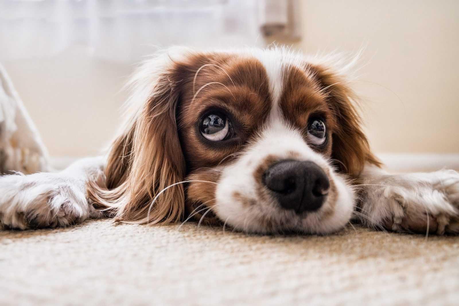 Migliori.io Top 10: I migliori accessori per cani